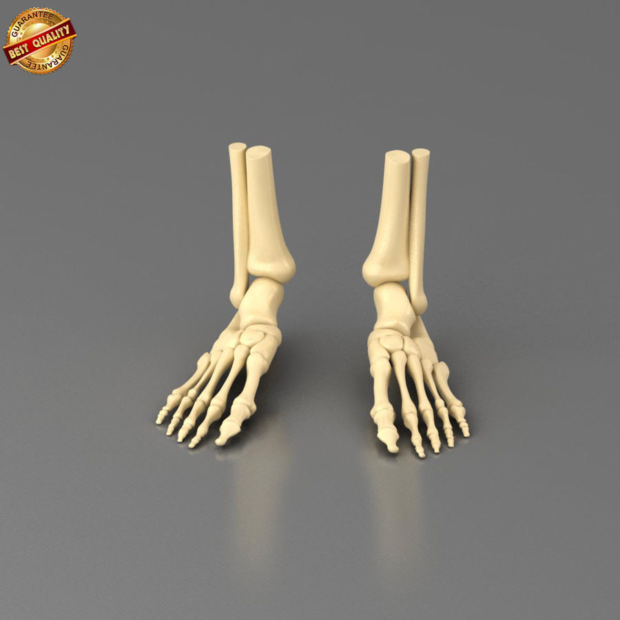 Foot Skeleton royalty-free 3d model - Preview no. 2