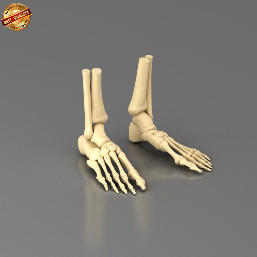 Foot Skeleton royalty-free 3d model - Preview no. 3