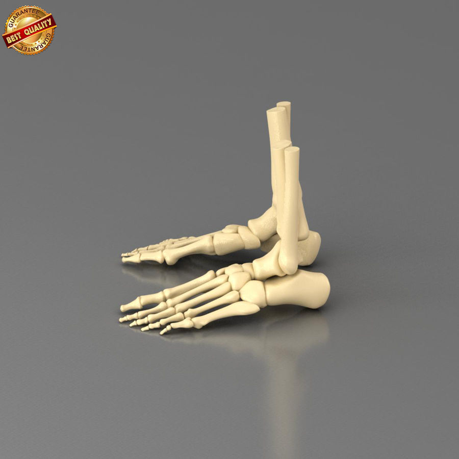 Foot Skeleton royalty-free 3d model - Preview no. 8
