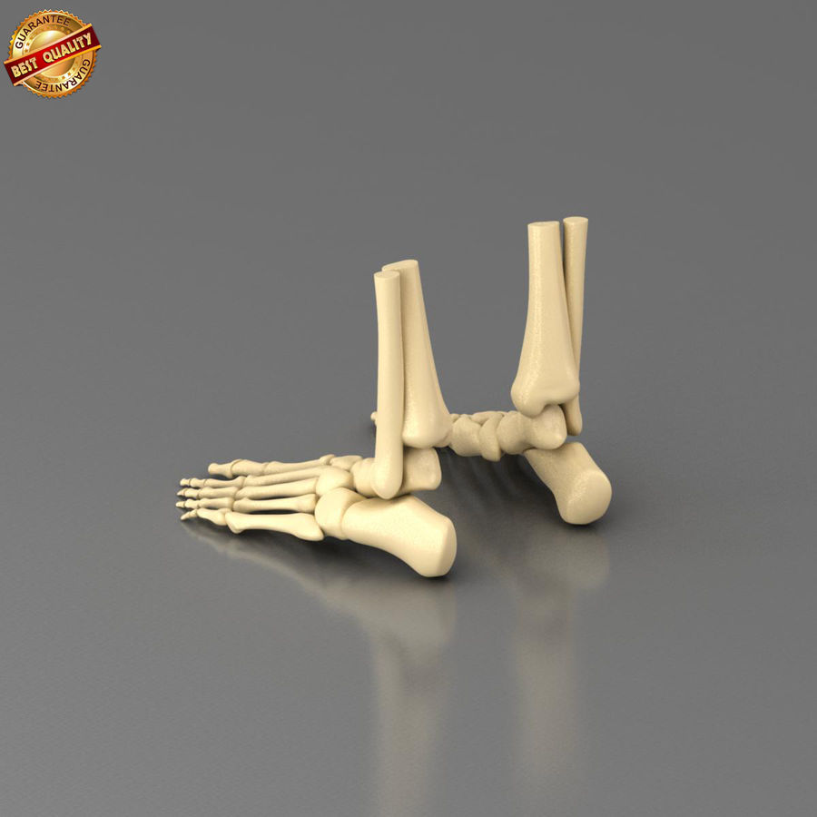 Foot Skeleton royalty-free 3d model - Preview no. 7