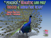 Peacock Low Poly Rigged Animated 3d model
