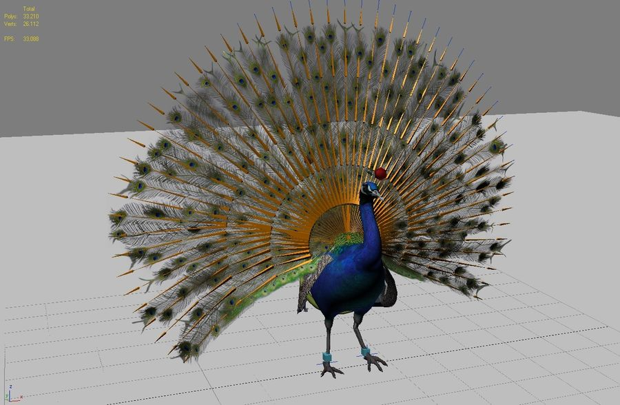 Peacock Low Poly Rigged Animated 3d Model 39 Oth Max Obj Fbx