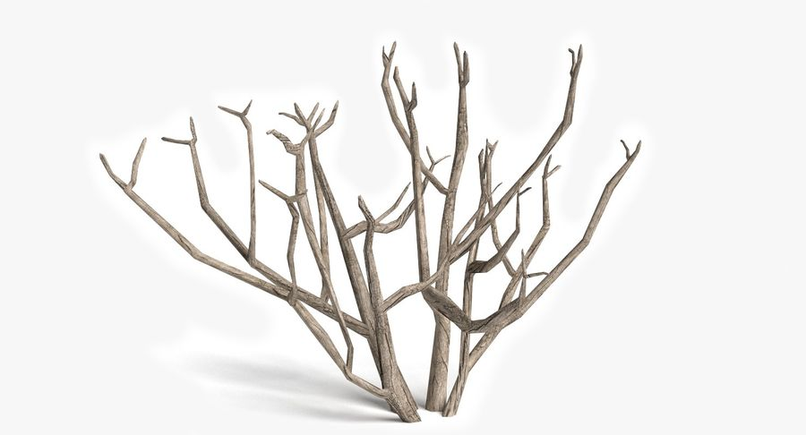 Dead Trees and Plants Collection royalty-free 3d model - Preview no. 9