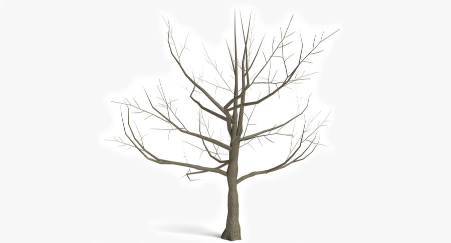 Dead Trees and Plants Collection royalty-free 3d model - Preview no. 29