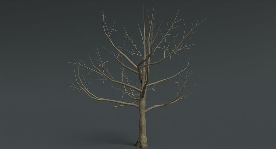Dead Trees and Plants Collection royalty-free 3d model - Preview no. 30