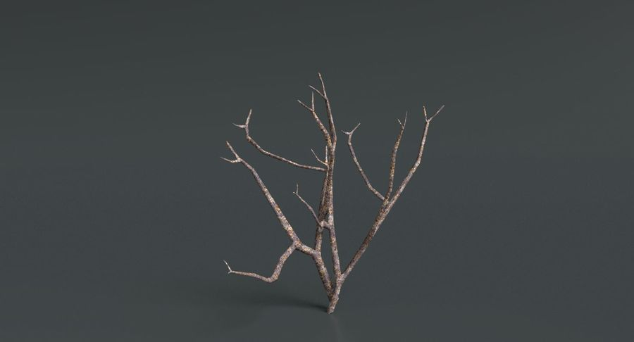 Dead Trees and Plants Collection royalty-free 3d model - Preview no. 14