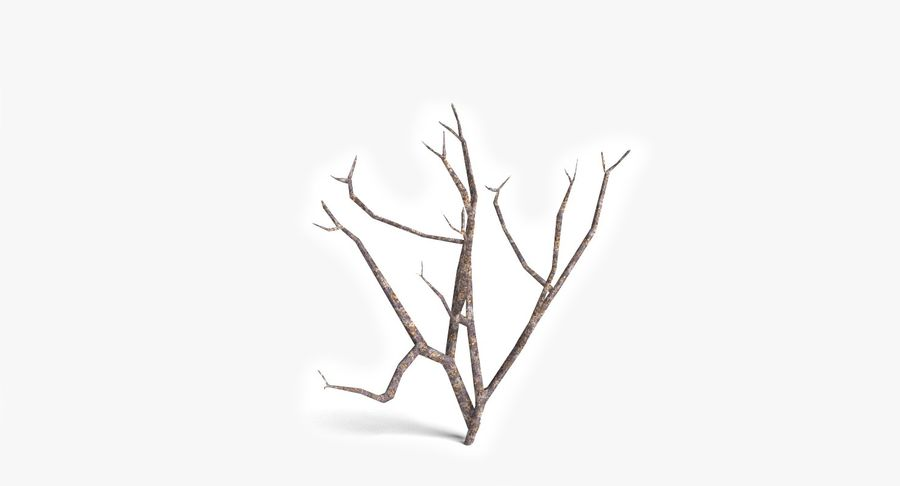 Dead Trees and Plants Collection royalty-free 3d model - Preview no. 13