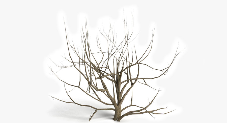 Dead Trees and Plants Collection royalty-free 3d model - Preview no. 5