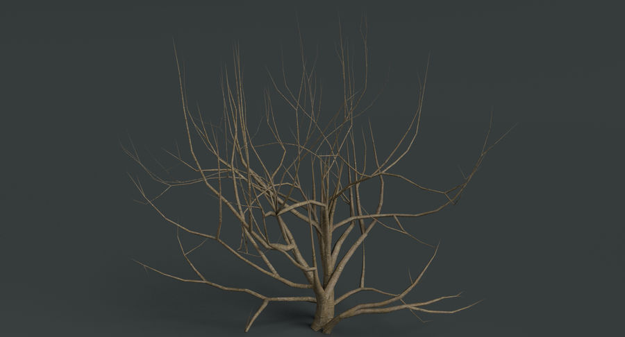 Dead Trees and Plants Collection royalty-free 3d model - Preview no. 6