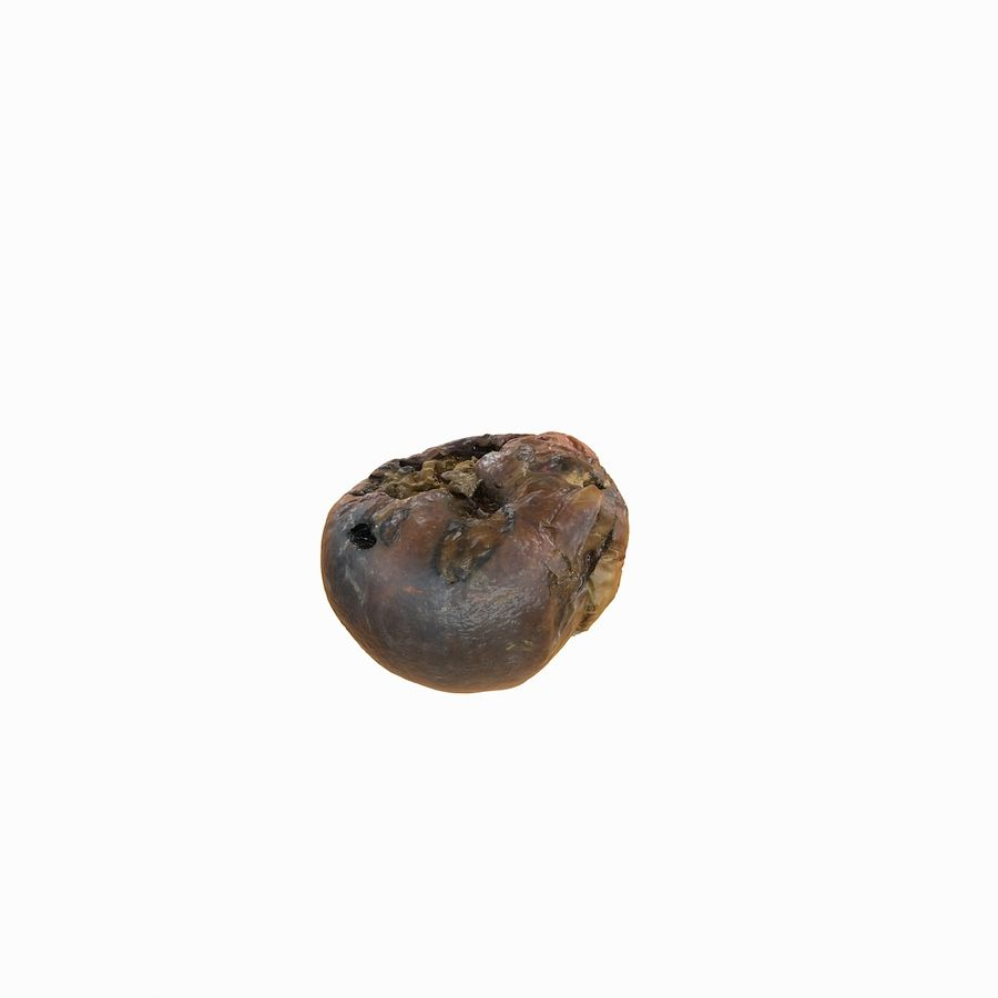 Rotte rotte Apple royalty-free 3d model - Preview no. 30