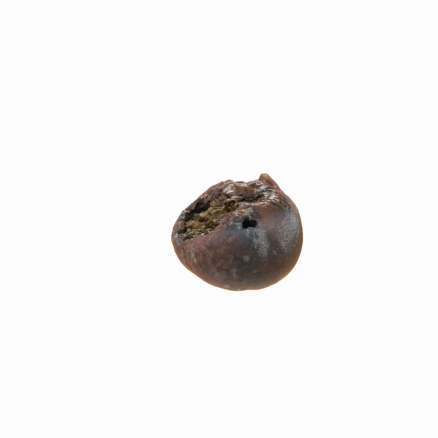 Rotte rotte Apple royalty-free 3d model - Preview no. 29