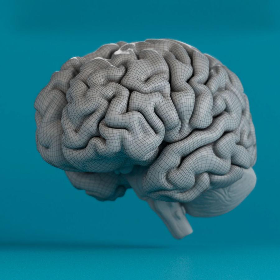 İnsan beyni royalty-free 3d model - Preview no. 8