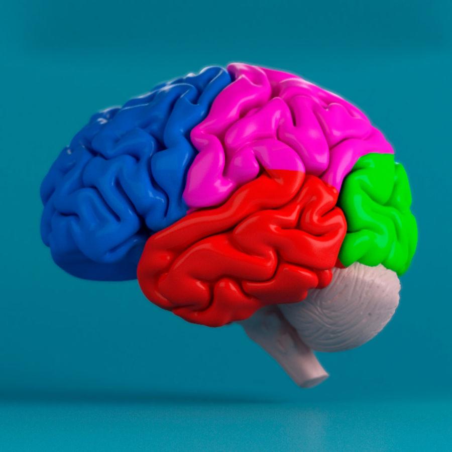 İnsan beyni royalty-free 3d model - Preview no. 2