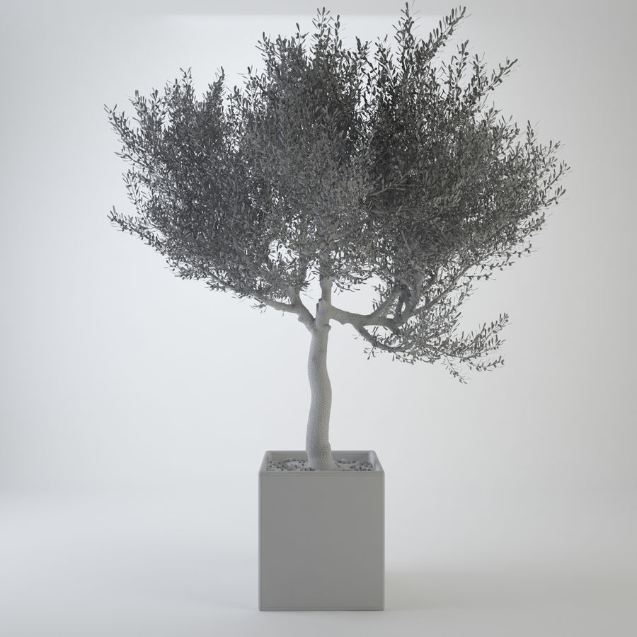 Oliveira ornamental royalty-free 3d model - Preview no. 3