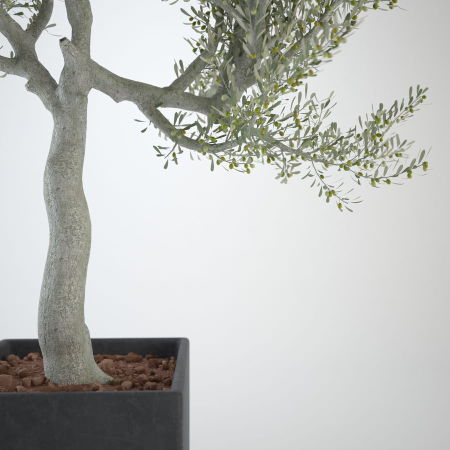 Oliveira ornamental royalty-free 3d model - Preview no. 4