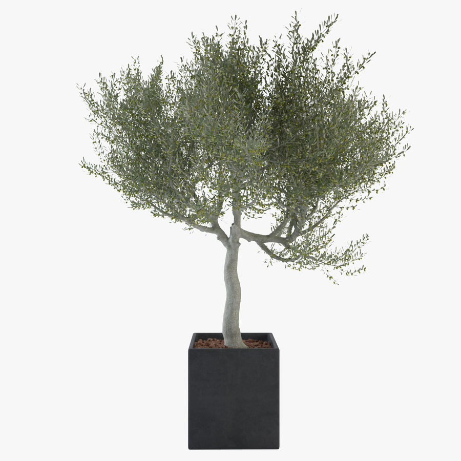 Oliveira ornamental royalty-free 3d model - Preview no. 1