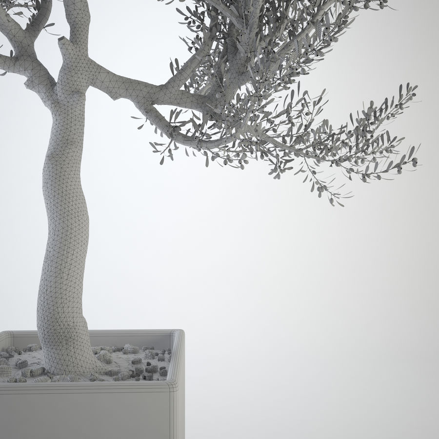 Oliveira ornamental royalty-free 3d model - Preview no. 5