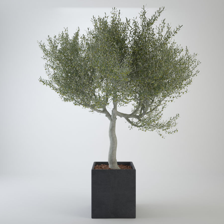 Oliveira ornamental royalty-free 3d model - Preview no. 2