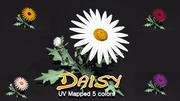 Daisy DC 3d model