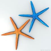 Blue and Orange starfish 3d model