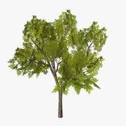 Tree_07 3d model