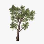 Tree_08 3d model
