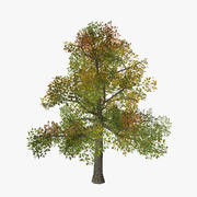 Tree_13 3d model