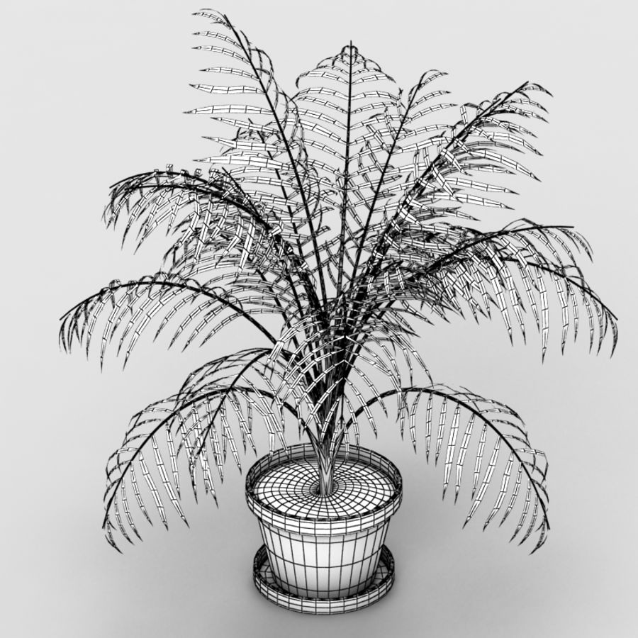 Palm Tree House Plant royalty-free 3d model - Preview no. 7