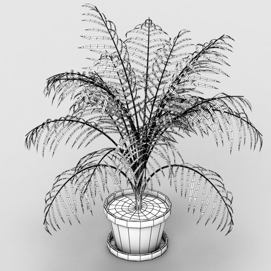 Palm Tree House Plant royalty-free 3d model - Preview no. 6
