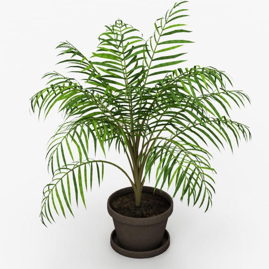 Palm Tree House Plant royalty-free 3d model - Preview no. 3