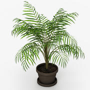 Palm Tree House Plant 3d model