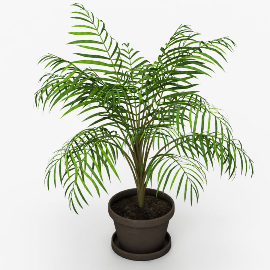 Palm Tree House Plant royalty-free 3d model - Preview no. 1