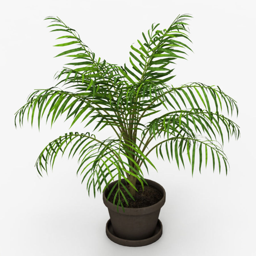 Palm Tree House Plant royalty-free 3d model - Preview no. 2