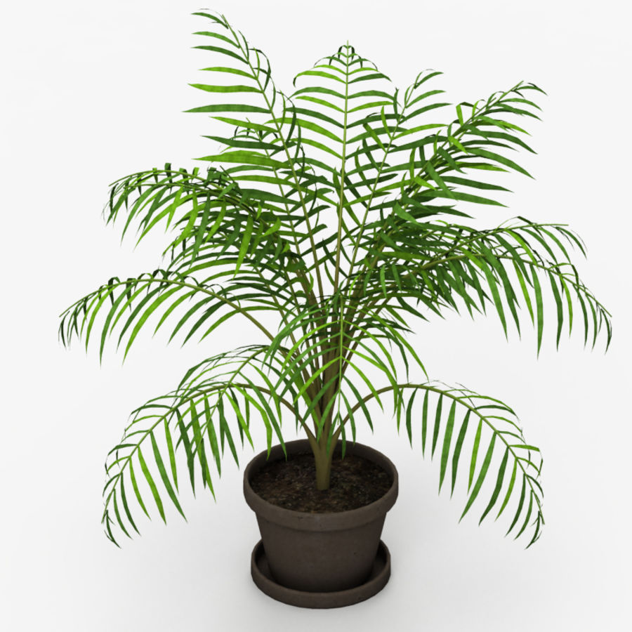 Palm Tree House Plant royalty-free 3d model - Preview no. 5