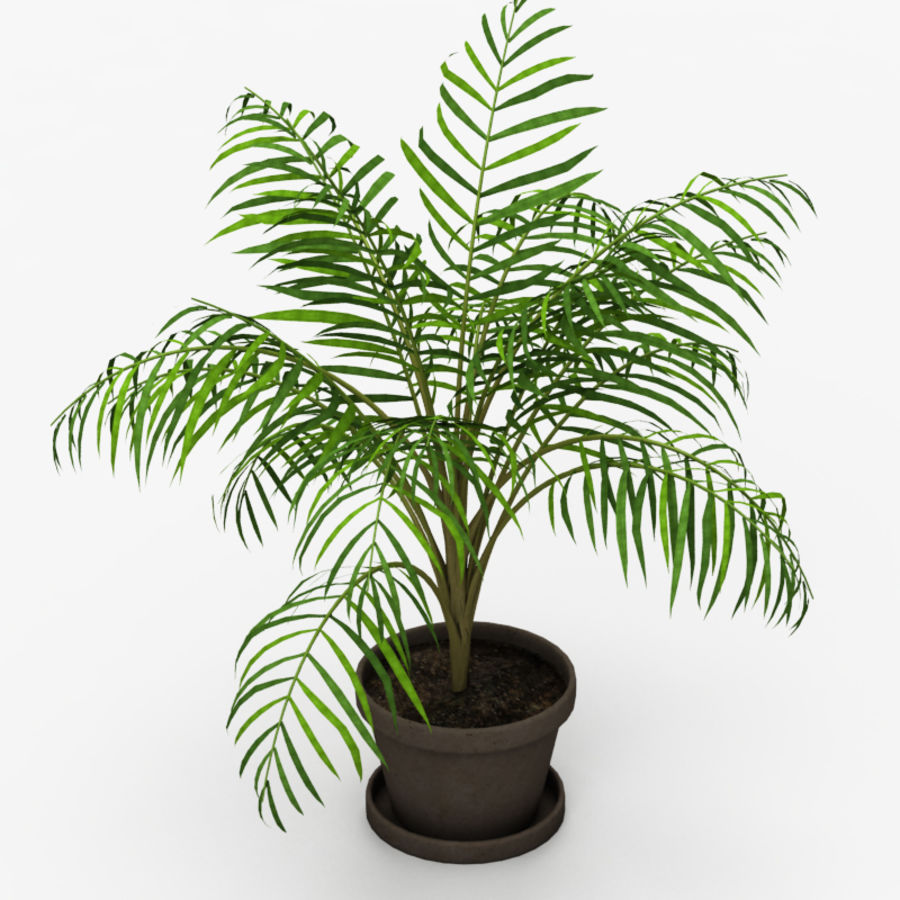 Palm Tree House Plant royalty-free 3d model - Preview no. 4