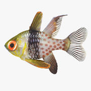 Pajama Cardinalfish 3d model