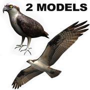 Osprey (2 modelli) 3d model