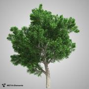 Árvore de folhas largas 01 3d model