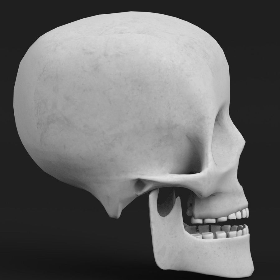 Anatomia - ludzka czaszka royalty-free 3d model - Preview no. 4