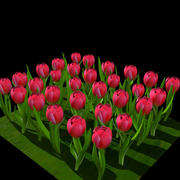 Rote Tulpe 3d model