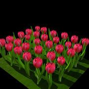 Red tulip 3d model