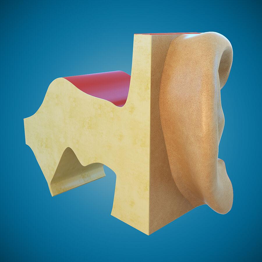 Anatomie van het oor royalty-free 3d model - Preview no. 6
