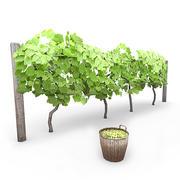 Виноградная лоза 1 3d model