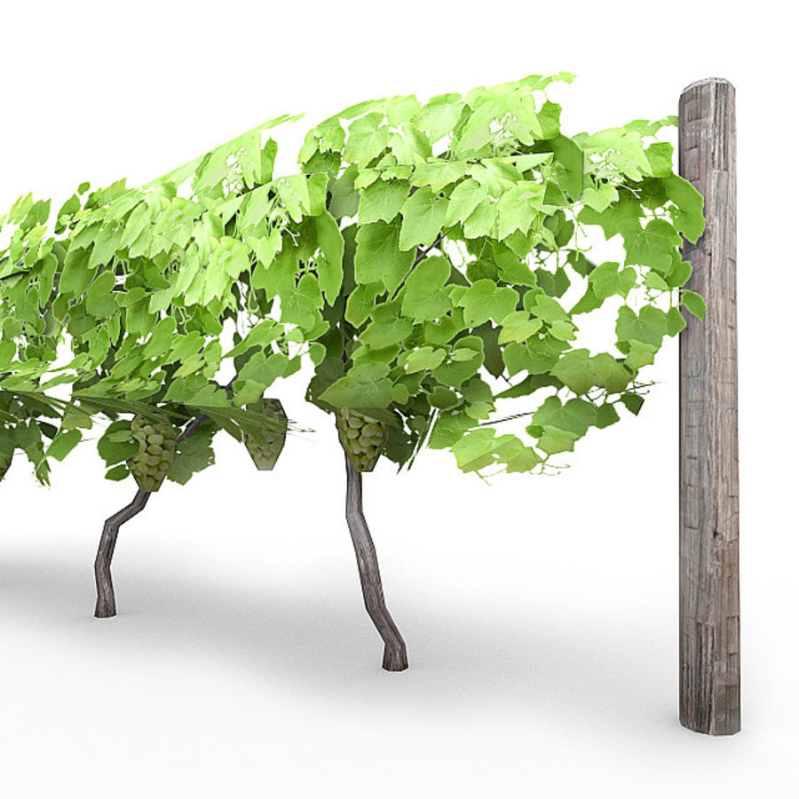 Grapevine 1 royalty-free 3d model - Preview no. 3