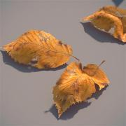 verlaat de herfst 3d model