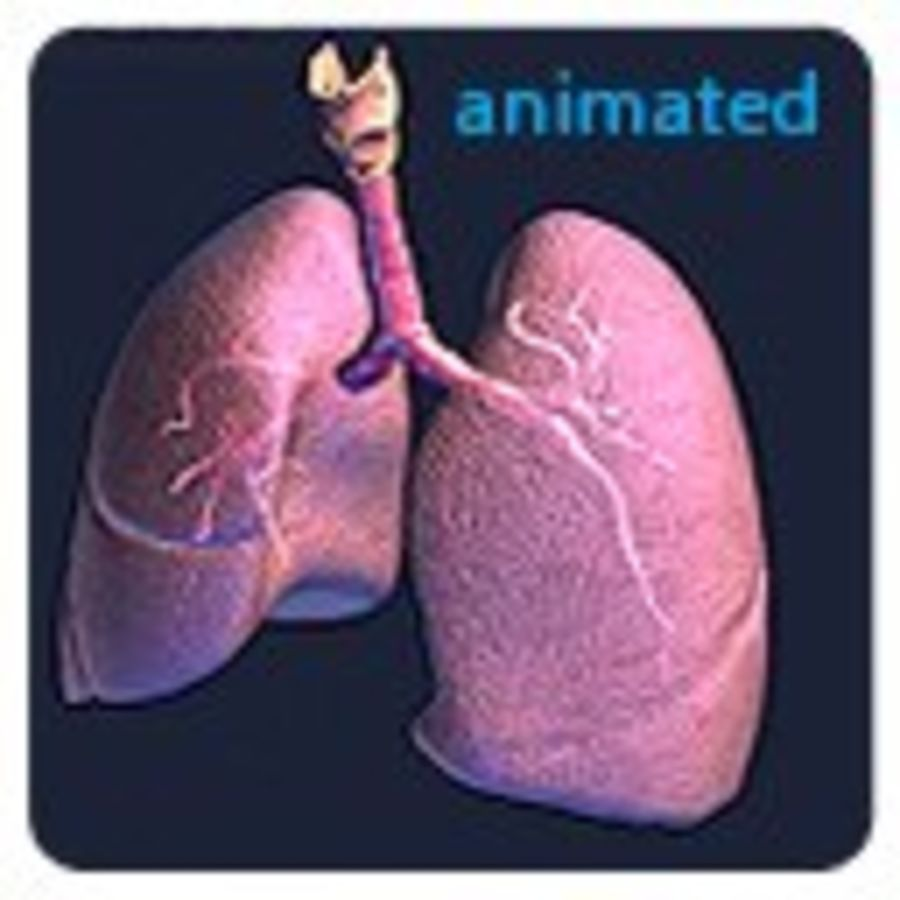 Realistic Lungs Animated royalty-free 3d model - Preview no. 8