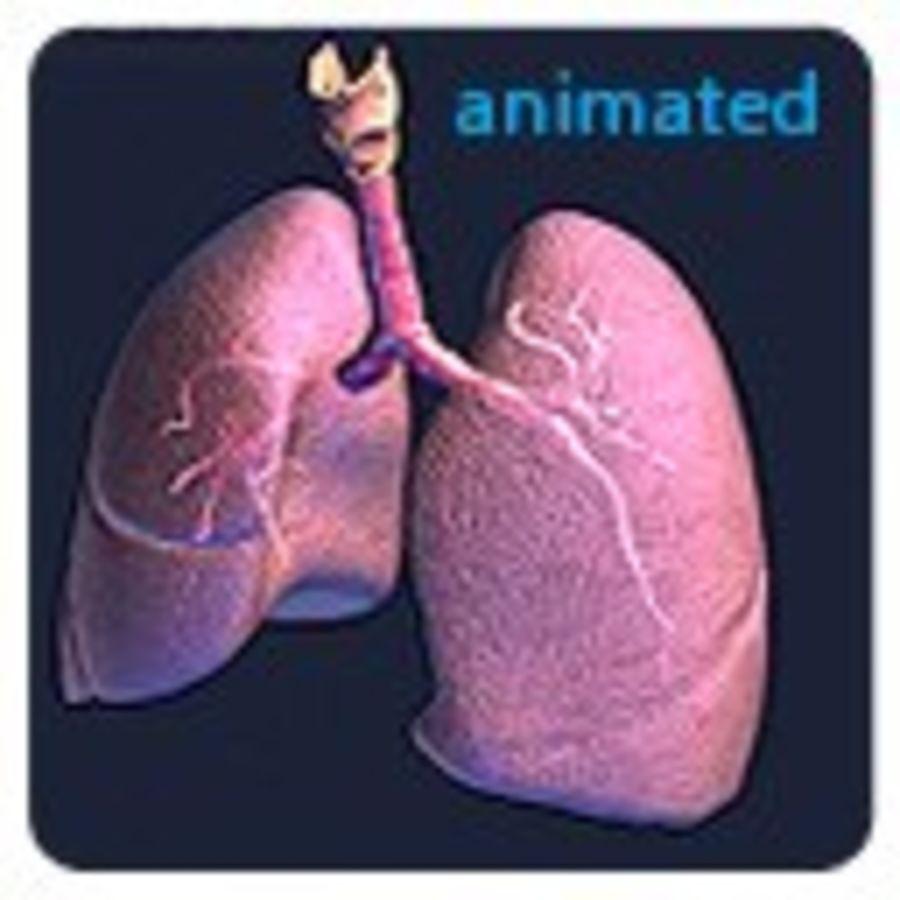 Animowane realistyczne płuca royalty-free 3d model - Preview no. 8