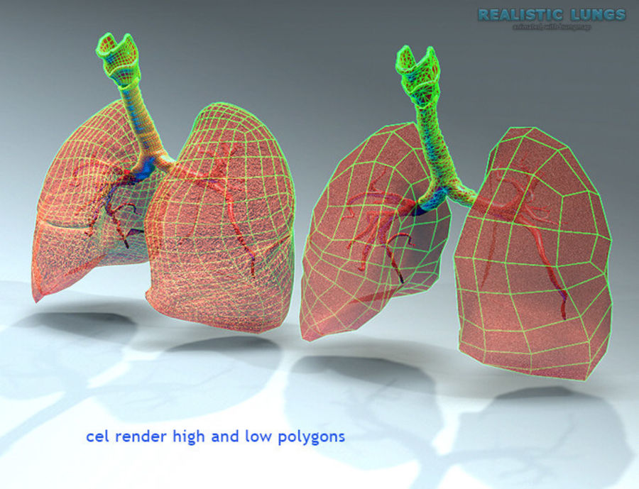 Realistic Lungs Animated royalty-free 3d model - Preview no. 2