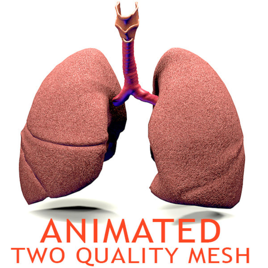 Realistic Lungs Animated royalty-free 3d model - Preview no. 1