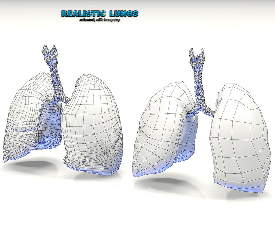 Realistic Lungs Animated royalty-free 3d model - Preview no. 5